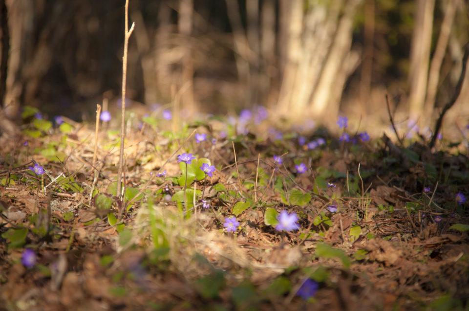 Kevad tärkab nii merel, kui metsas