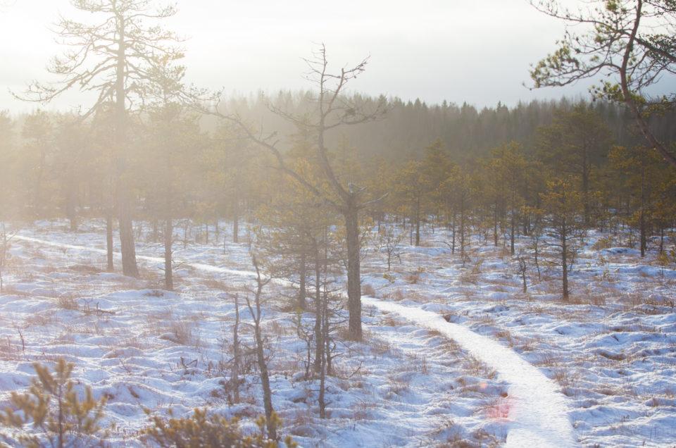 Talve kahepalgelisus